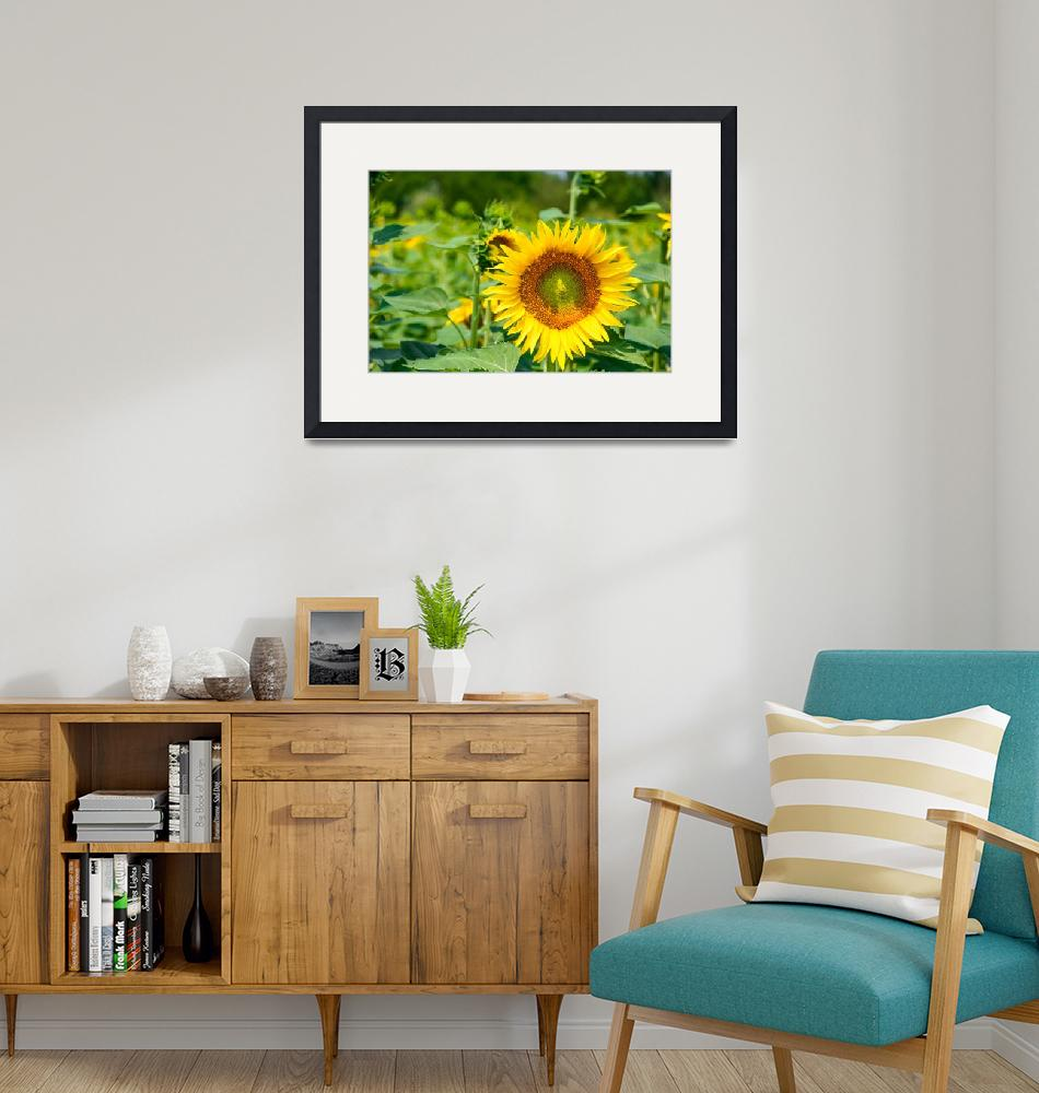 """""""The sunny flower""""  (2013) by iPilot1000"""