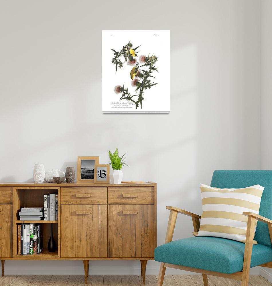 """""""American Goldfinch, Plate 33""""  by FineArtClassics"""