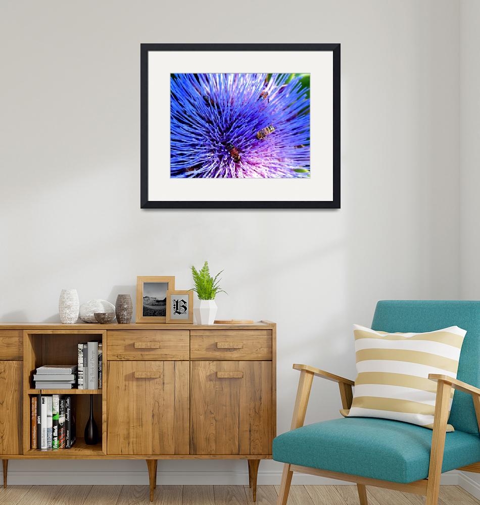 """ARTICHOKE FLOWER""  by stephenwilliams"