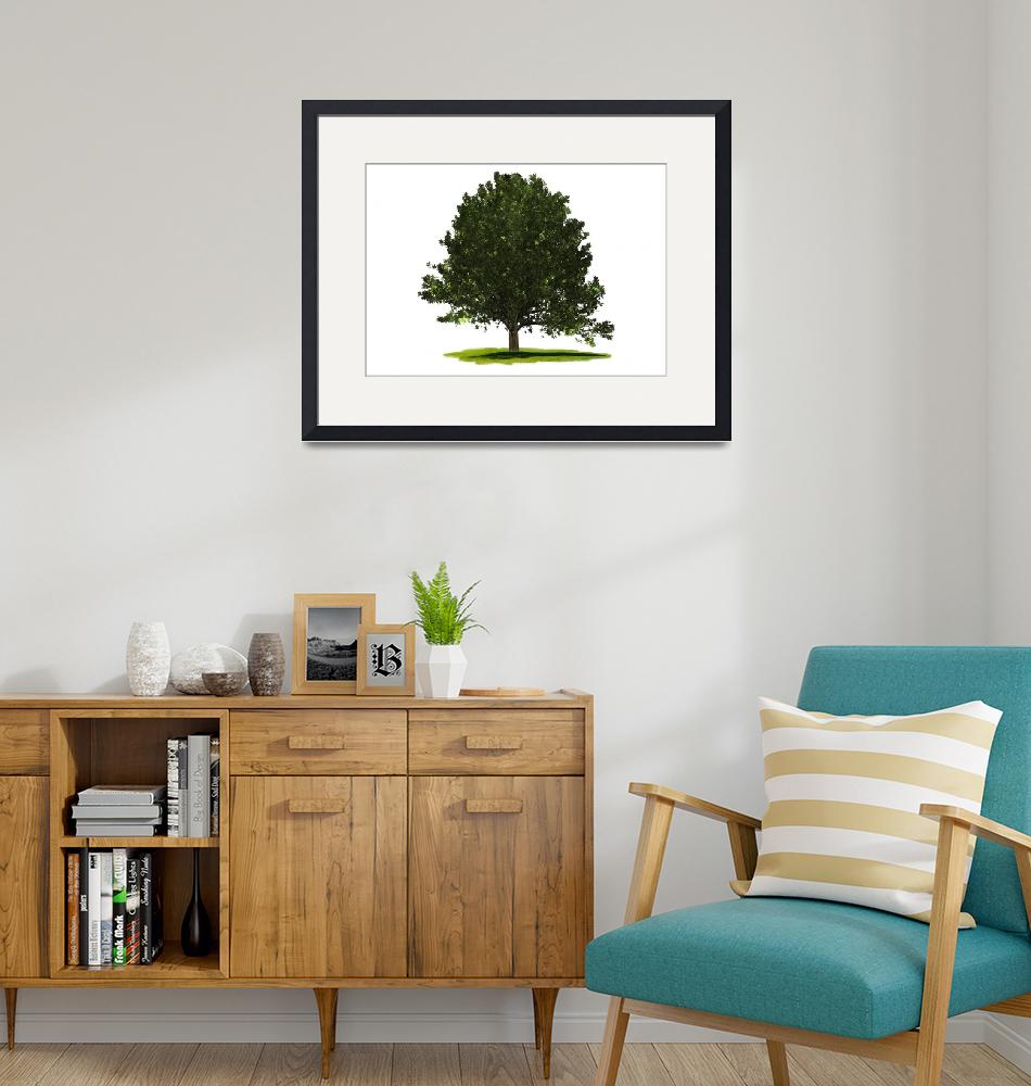 """""""Oak Tree white on white background""""  (2020) by southafricaphotos"""