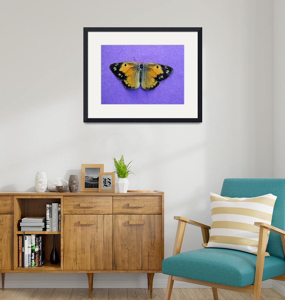 """Butterfly on Purple 5x7""  (2016) by KsWorldArt"