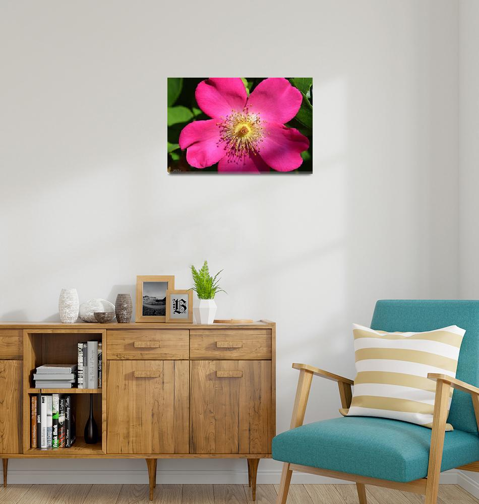 """""""Beautiful Pink Flower""""  (2012) by theblueplanet"""