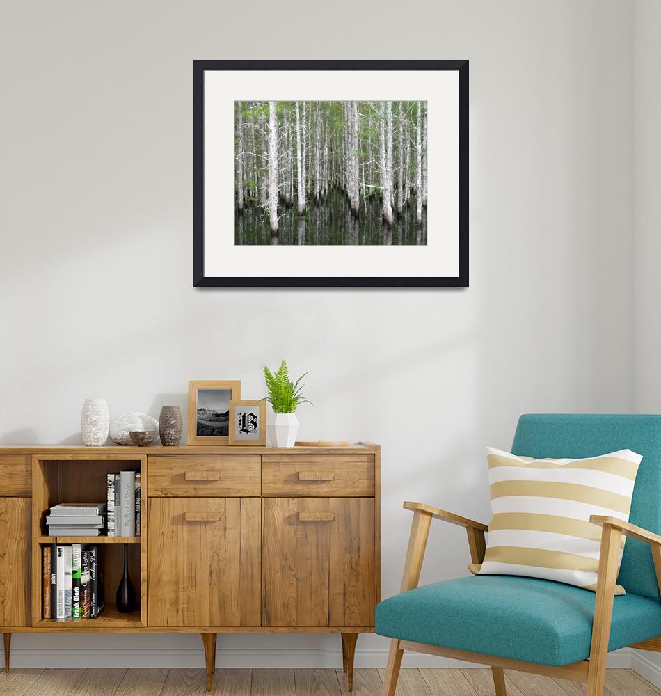 """""""Cypress Trees at the Edge of the Jane Green Swamp""""  by marshbunny"""