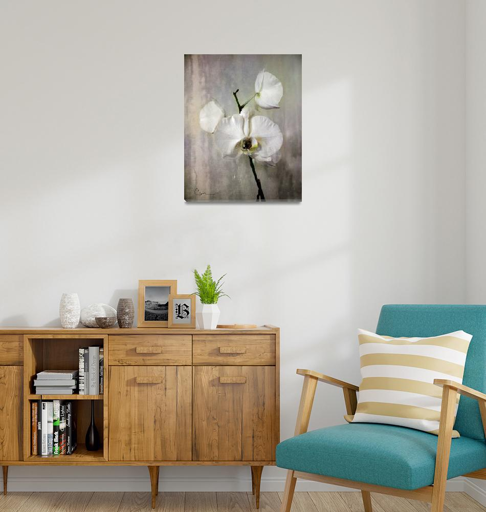"""""""Silver Orchid""""  by ellsworth"""