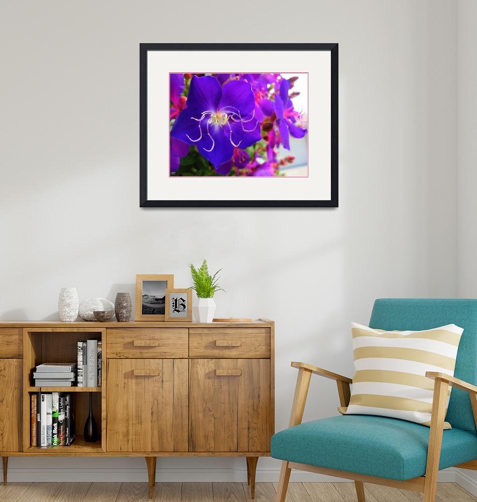 """Tibouchina Loveliness""  (2009) by Caz"