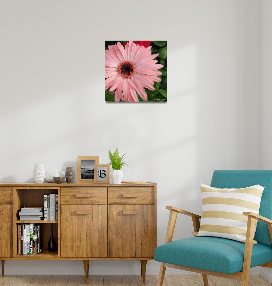 """""""Square Framed Pink Daisy""""  (2011) by bettynorthcutt"""