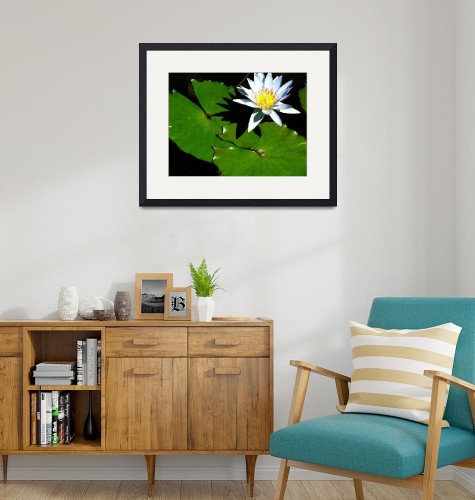 """""""Single White Lily""""  (2005) by DonnaCorless"""