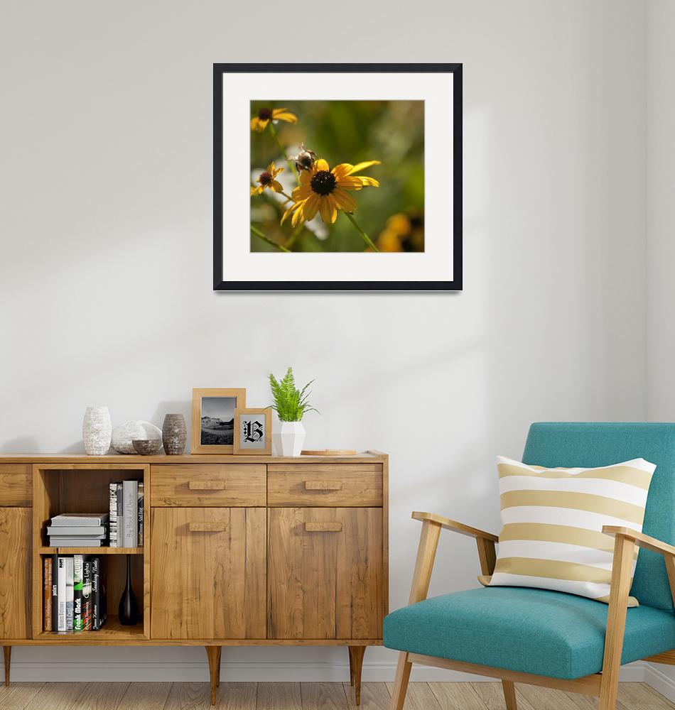 """""""Black-eyed Susan With Bee""""  (2008) by poetryoflight"""