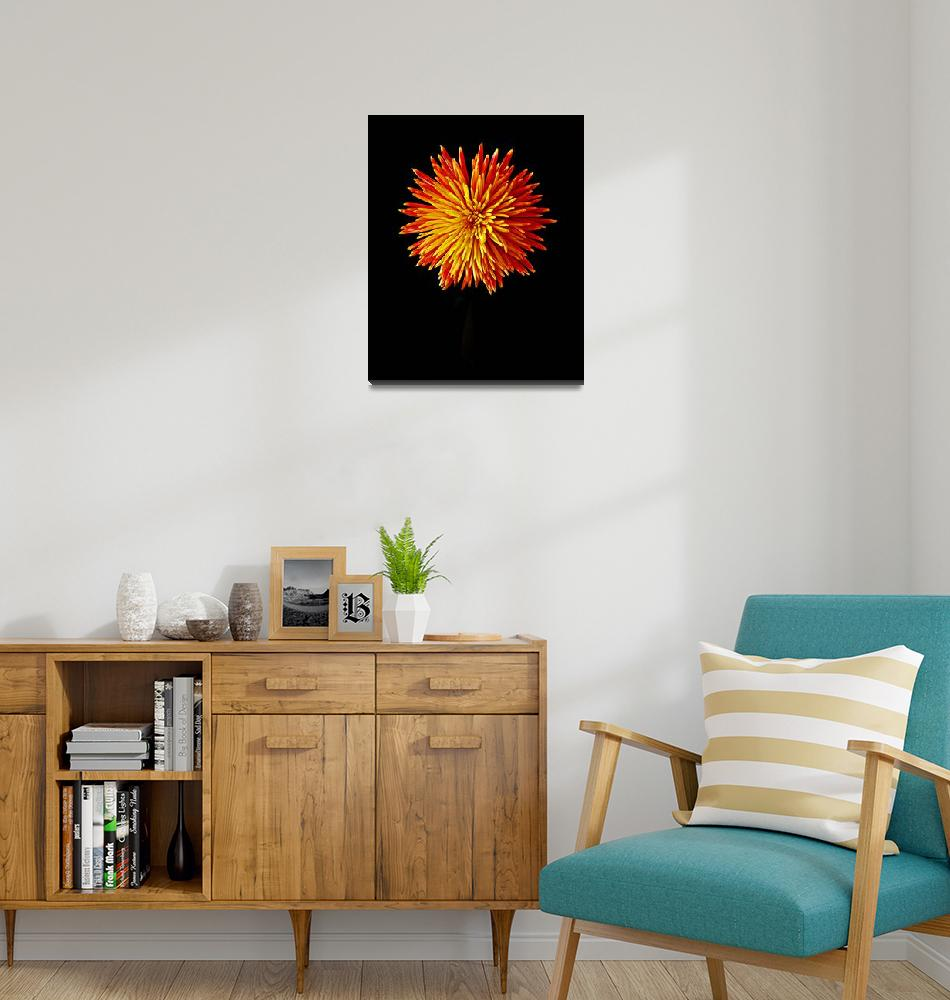 """Firework Chrysanthemum""  (2010) by aroundtheisland"