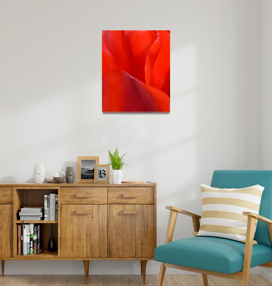 """""Red Tulip 1"" #1042315.0676""  (2015) by achimkrasenbrinkart"