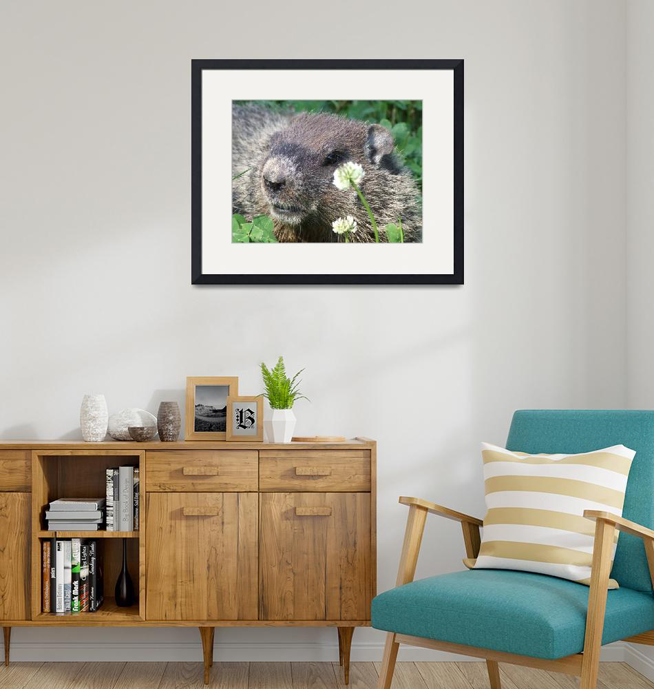 """""""Beaver in clover""""  (2009) by Hartphotography"""