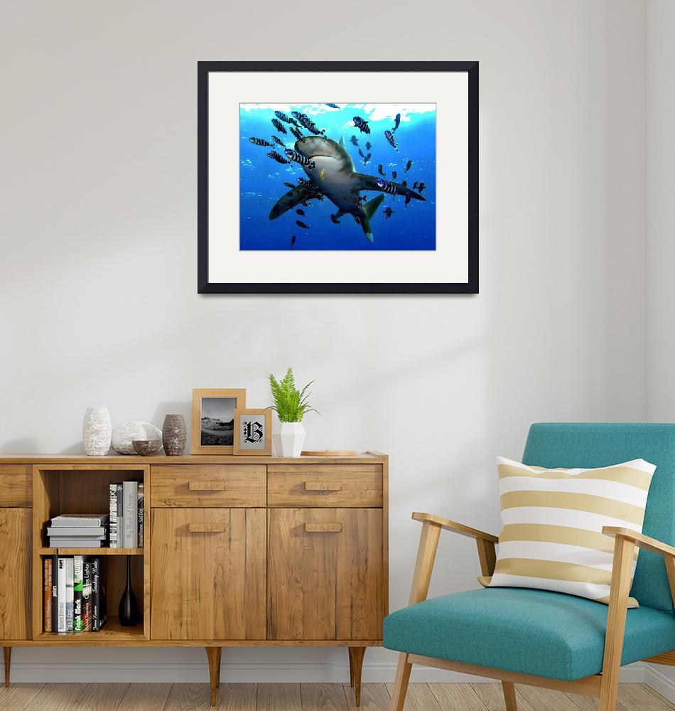 """""""Oceanic Whitetip Hovering""""  by SafariPrints"""