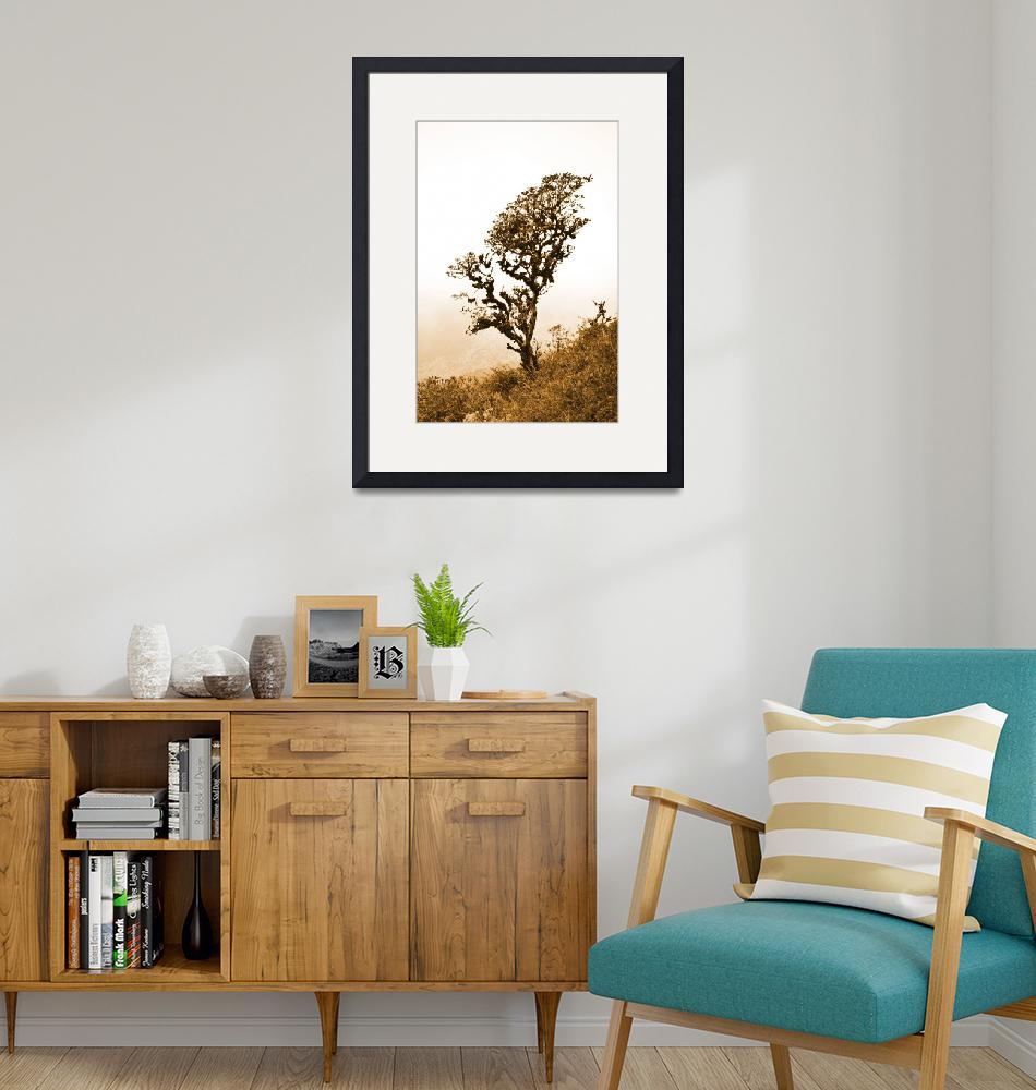 """""""Lone Rhododendron Tree on Mountain""""  (2019) by mariemedeirosphotography"""