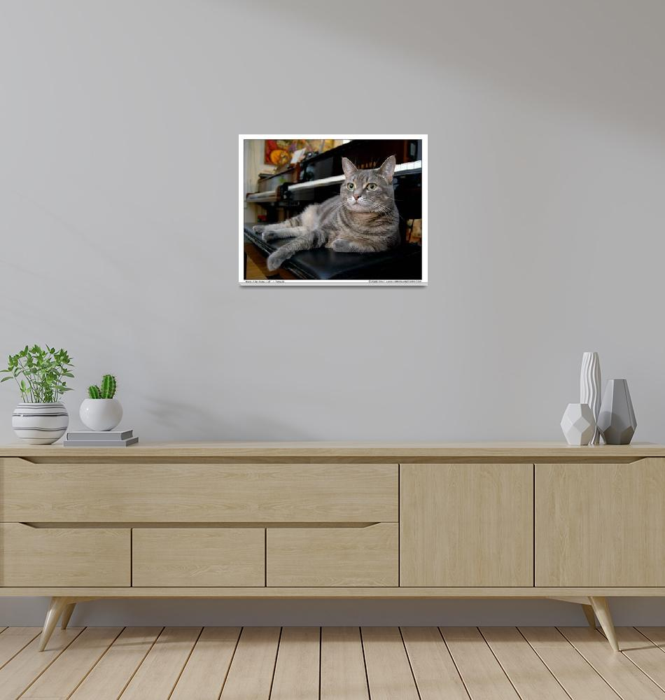 """""""Nora The Piano Cat™ - n0028""""  (2008) by ravenswingstudio"""