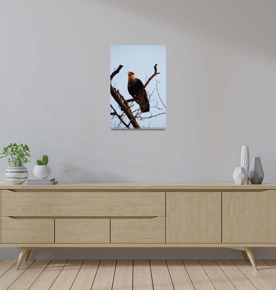 """Northern Crested-Caracara""  (2014) by chris77"
