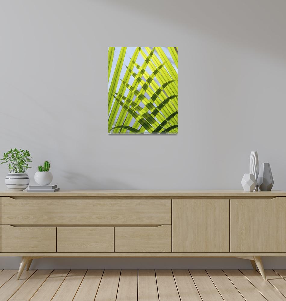 """Palm Leaves, Close Up Sri Lanaka, Asia""  by DesignPics"