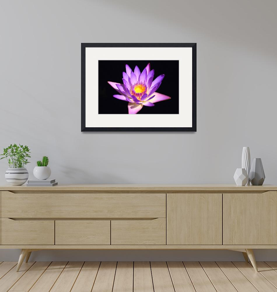 """""""Lavender Water Lily 4""""  (2009) by FordLou"""