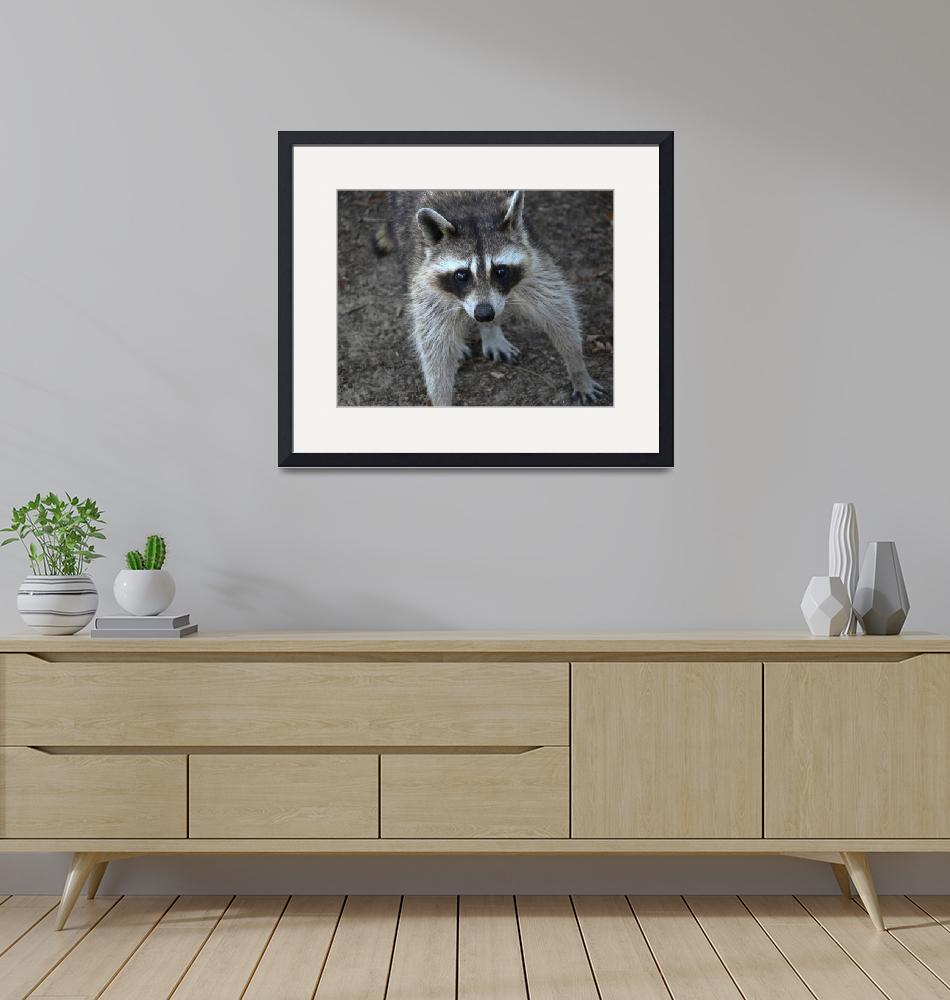 """""""Raccoon - Are you my mother?""""  (2006) by awsheffield"""
