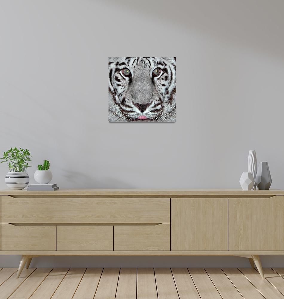 """White Tiger""  by toots"