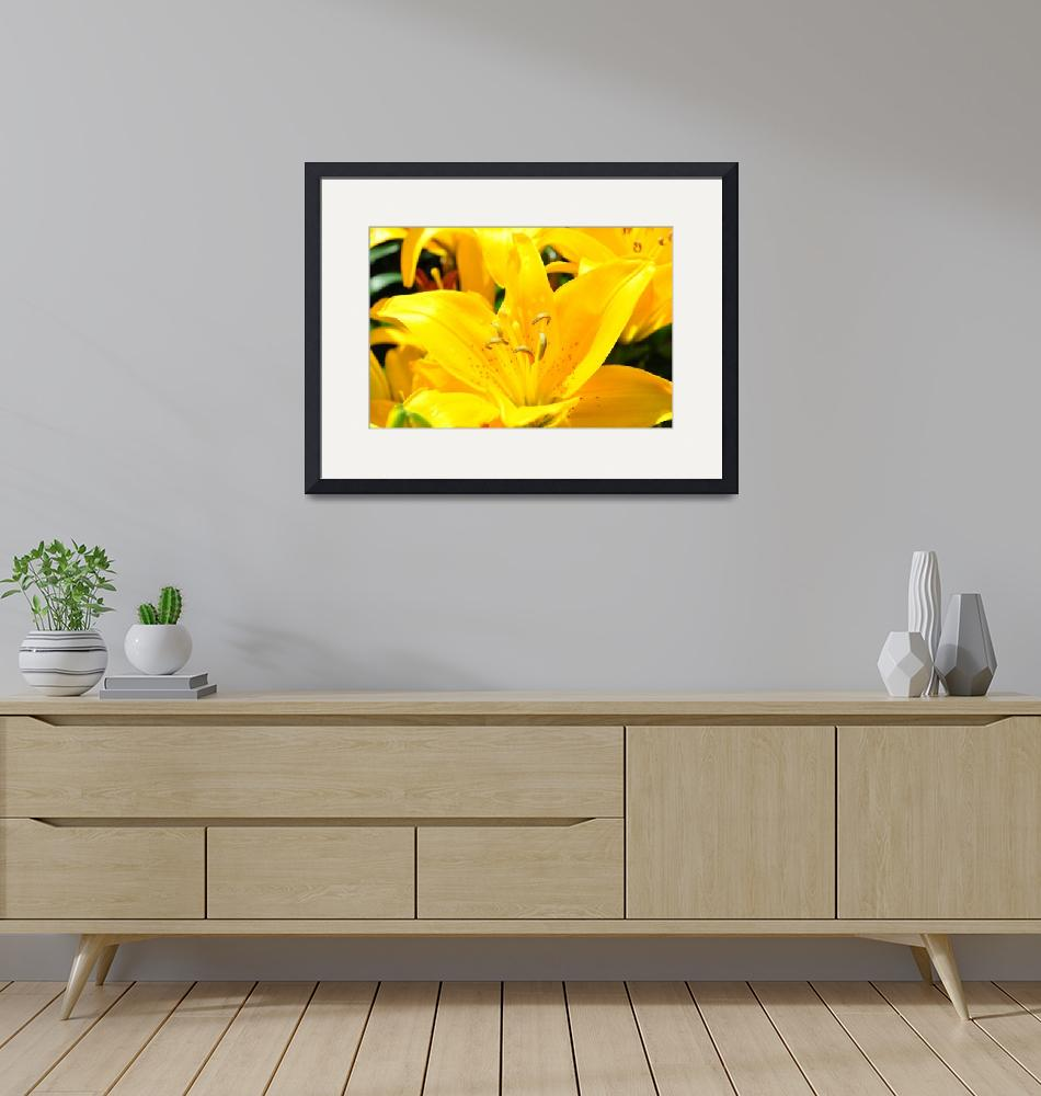 """Yellow Lily (1)""  (2011) by ElliePhotoArt"