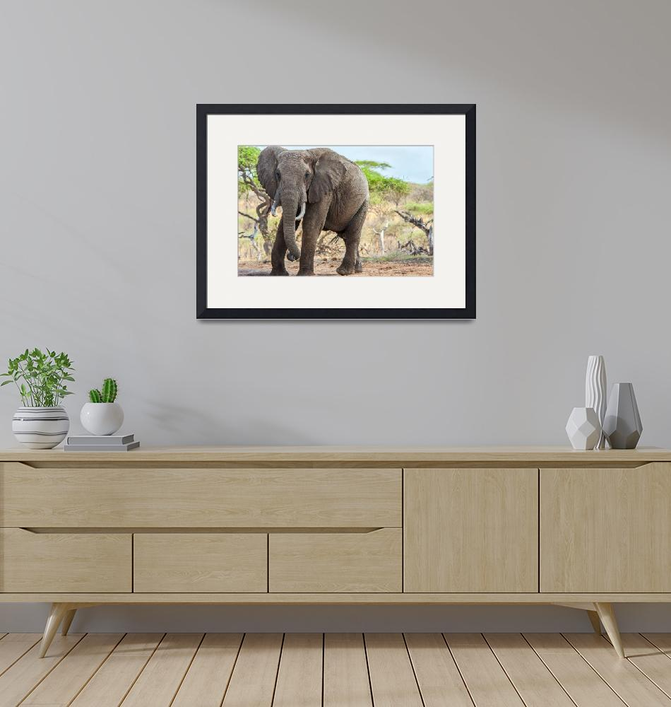 """East African Bull Elephant""  (2011) by mjphoto-graphics"