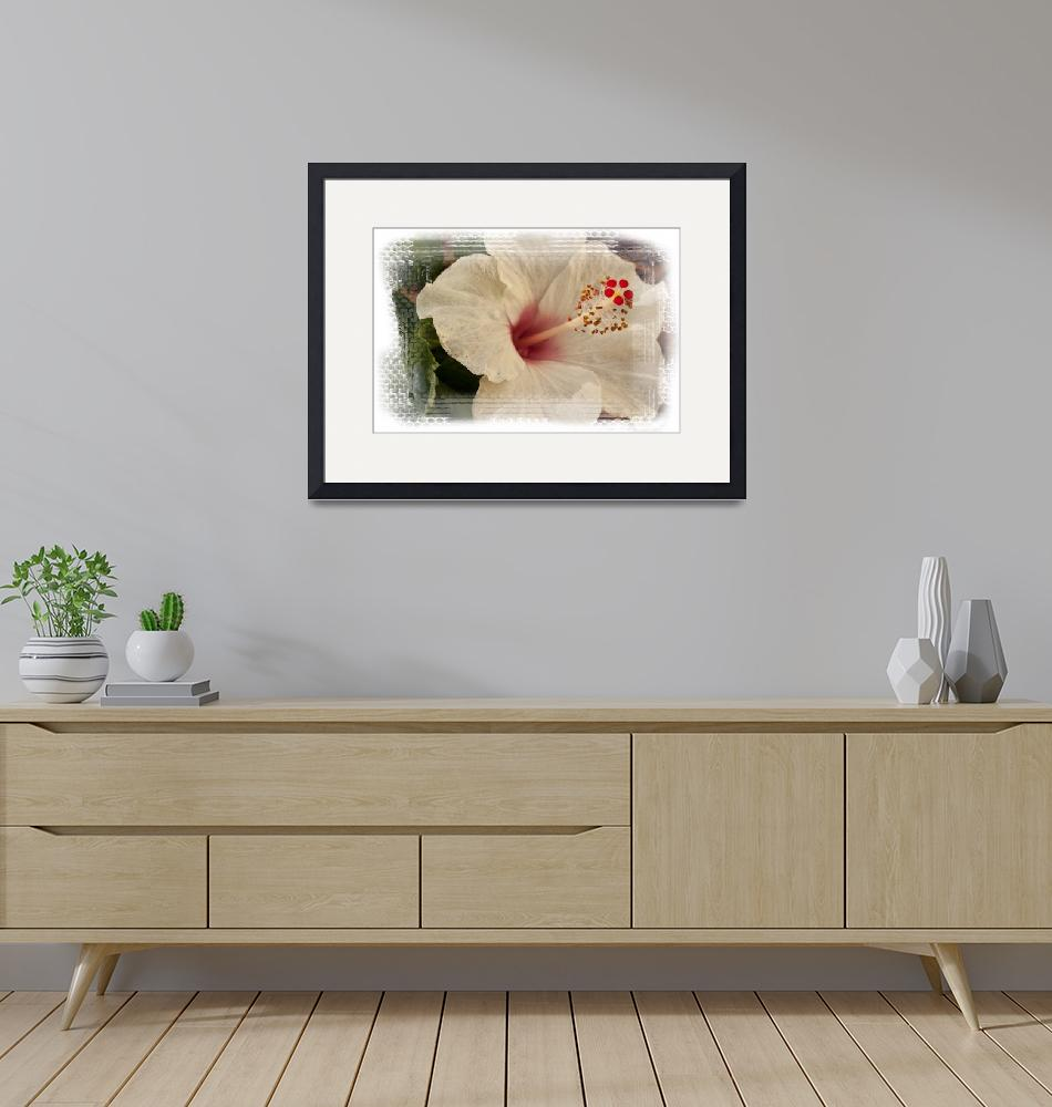 """""""Pink/white Hibiscus flower/plant/blossom""""  (2011) by MarinaPhotography"""