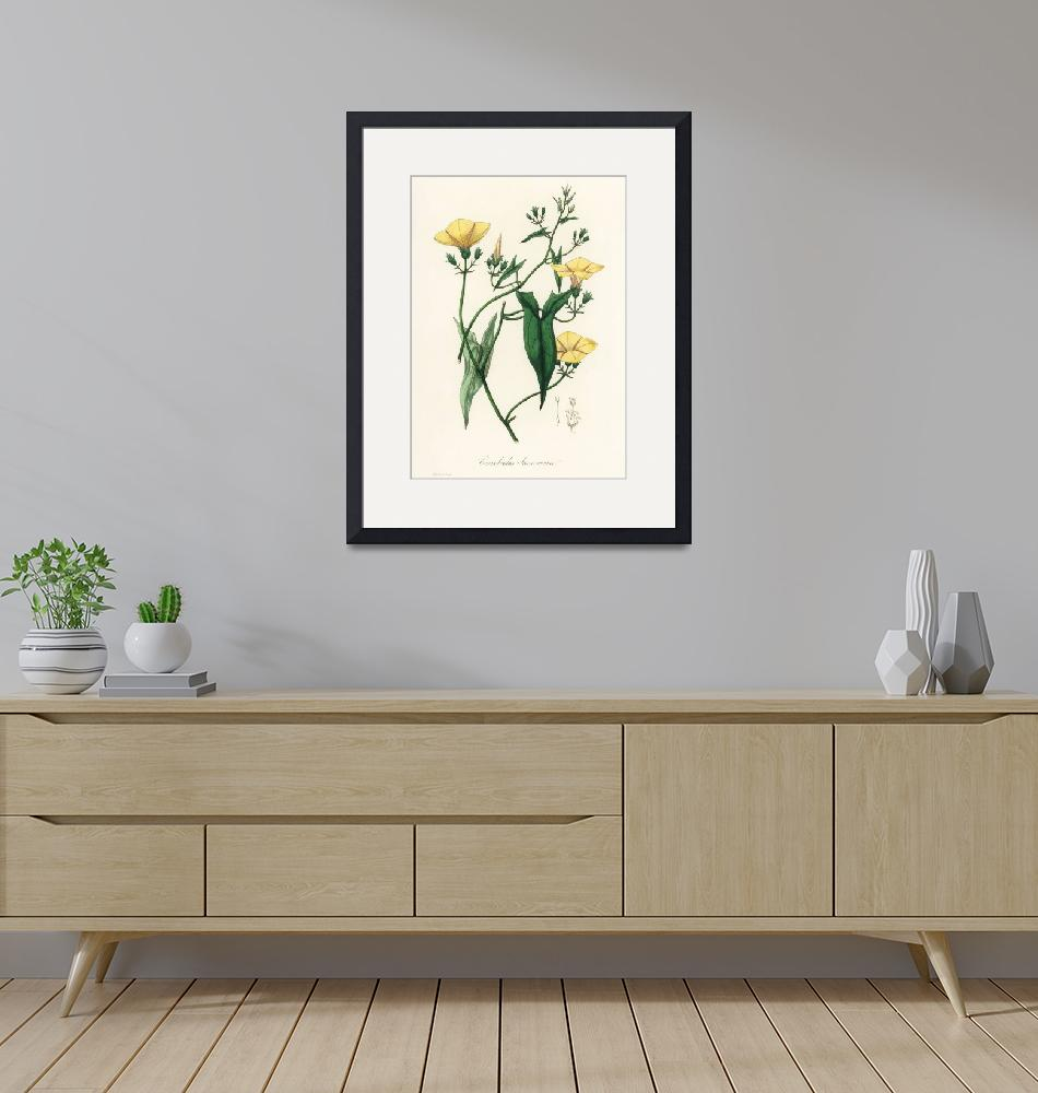 """Vintage Botanical Scammony"" by FineArtClassics"
