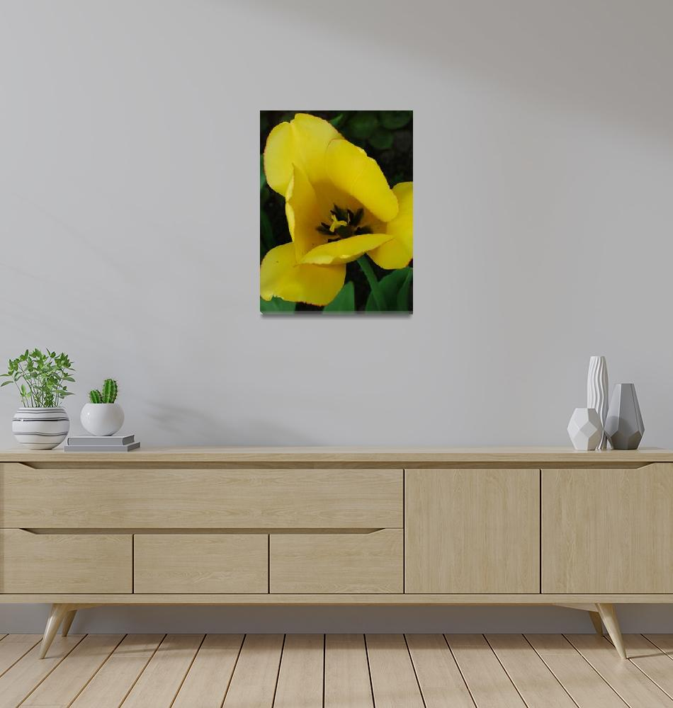 """""""Yellow Tulip""""  (2007) by DonnaCorless"""