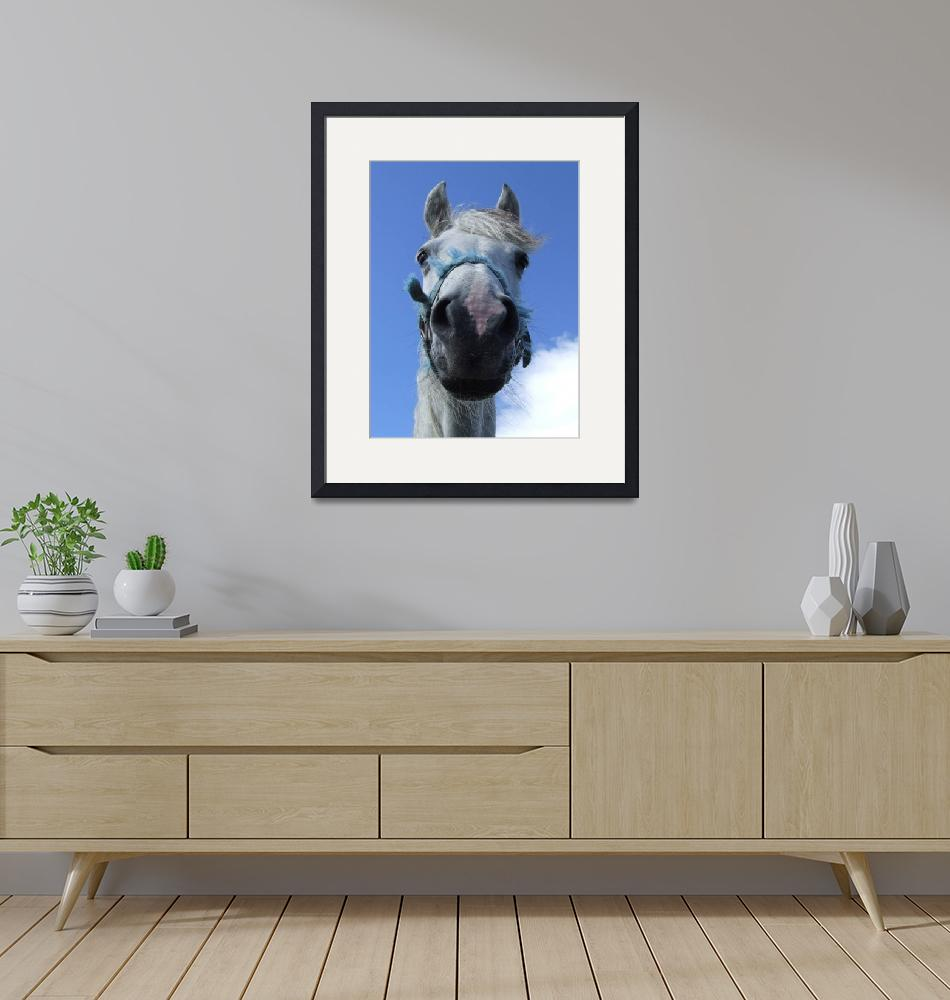 """""""Curious Horse"""" by Chatterbox"""