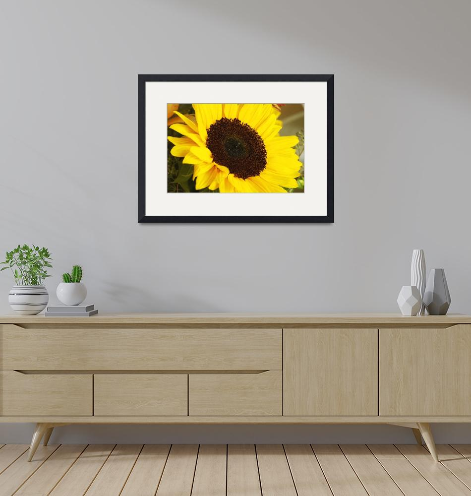 """""""Huge Yellow Sun Flower, Close Up_1850""""  (2005) by AmbientCreations"""