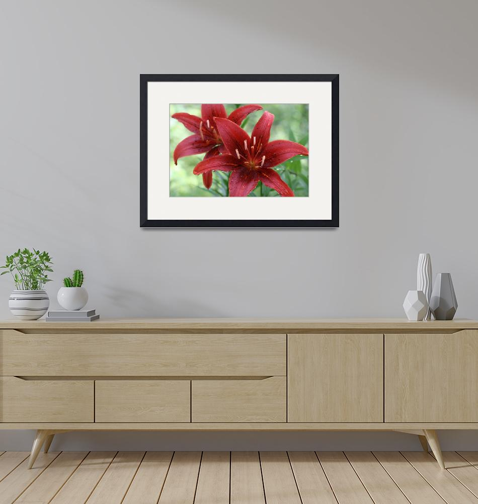 """""""Monte Nigra Lilies"""" (2008) by SolacePointe"""