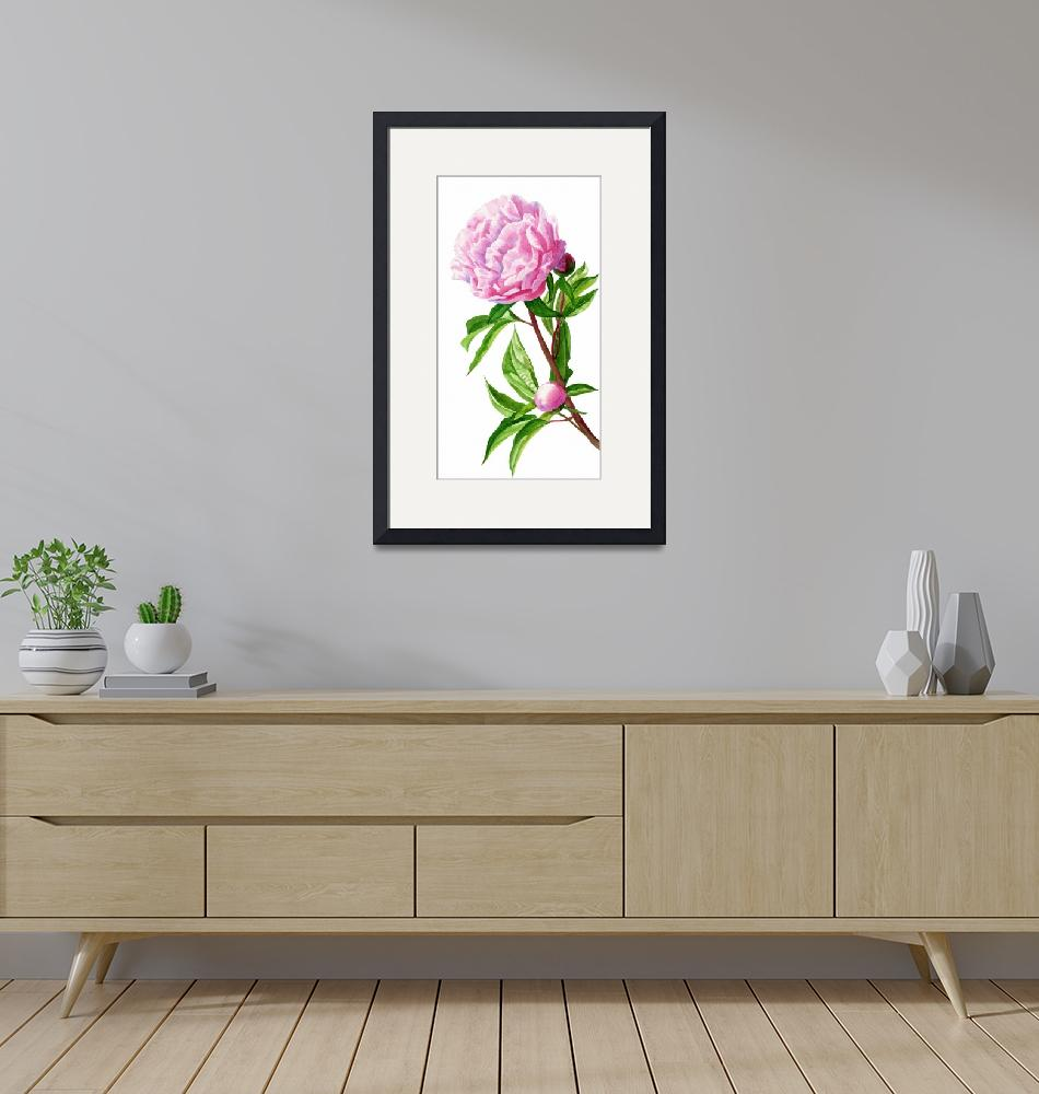 """""""Pink Peony with Leaves and Buds"""" (2013) by Pacific-NW-Watercolors"""