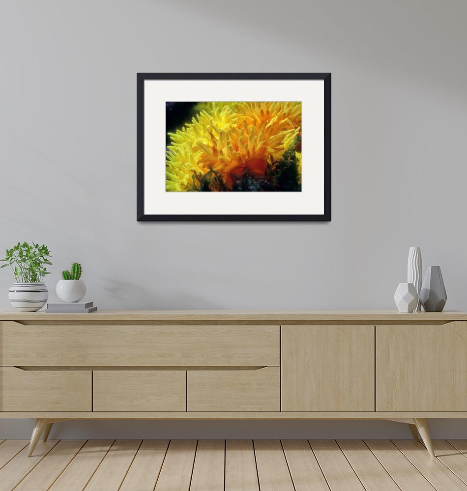 """""""Flowers of Fire Corals""""  (1988) by JoaoPonces"""