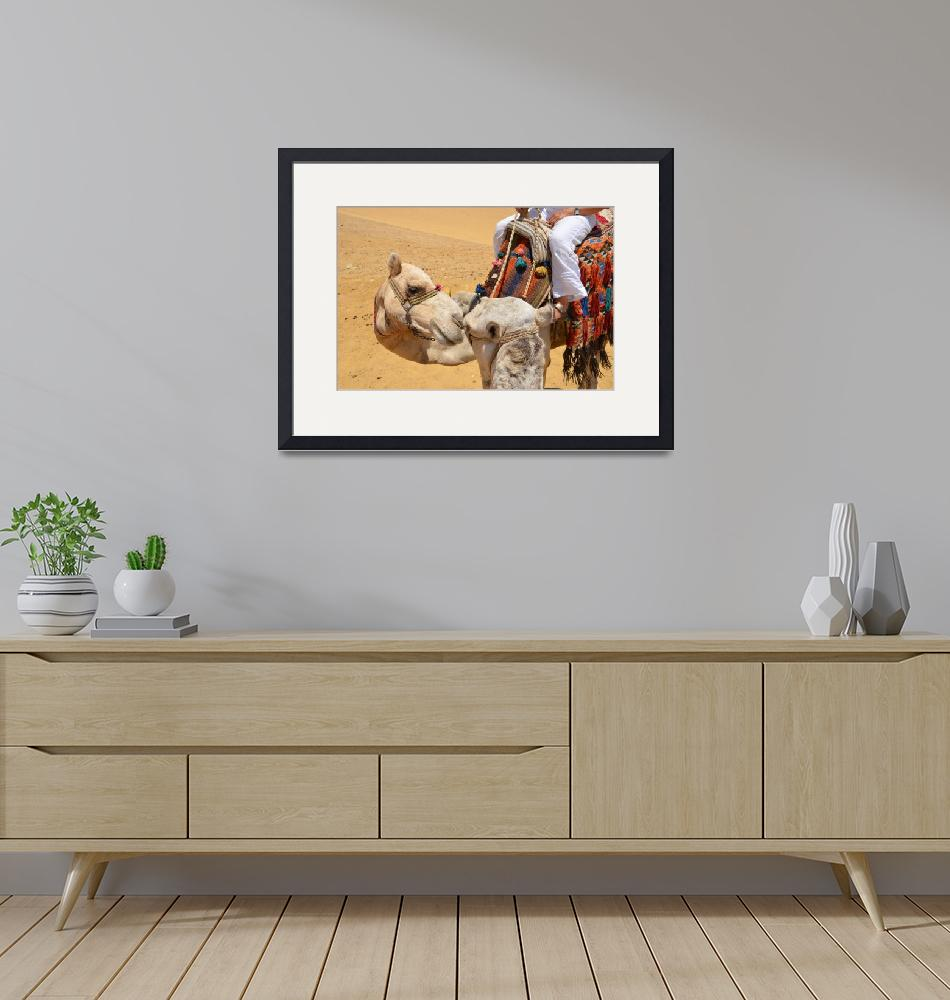 """""""Loving Camels""""  (2011) by malcolmsnook"""