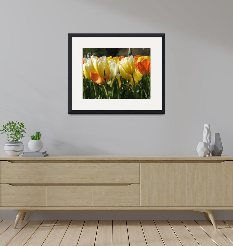 """""""Tulips on a warm sunny day""""  (2011) by ktroyer"""