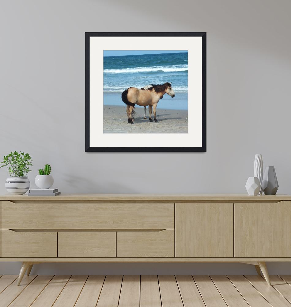 """""""Assateague 3""""  (2015) by Kimmary"""