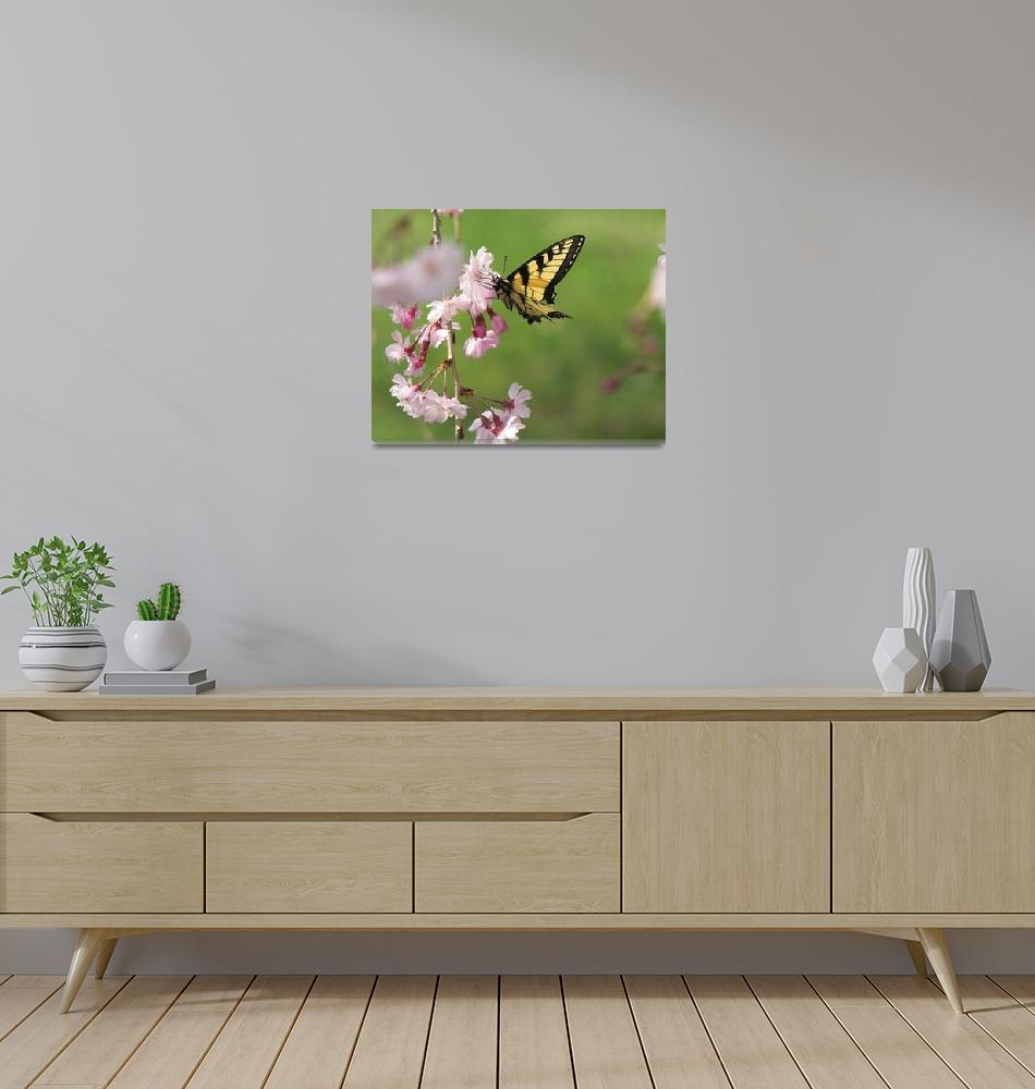 """""""Butterfly and Cherry Blossoms""""  (2007) by tricia"""
