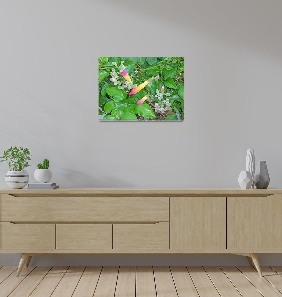 """""""Monkey Flowers""""  (2010) by Corbett"""