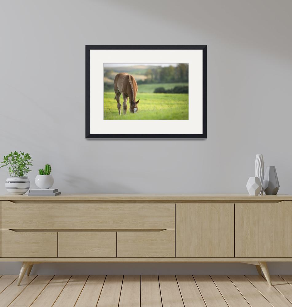 """""""Horse in field in county Wexford, Ireland""""  by IanMiddletonphotography"""