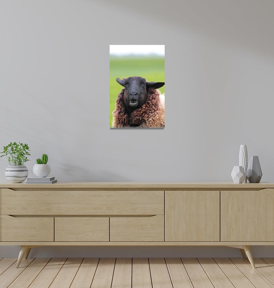 """Sheep Portrait""  (2010) by derausdo"
