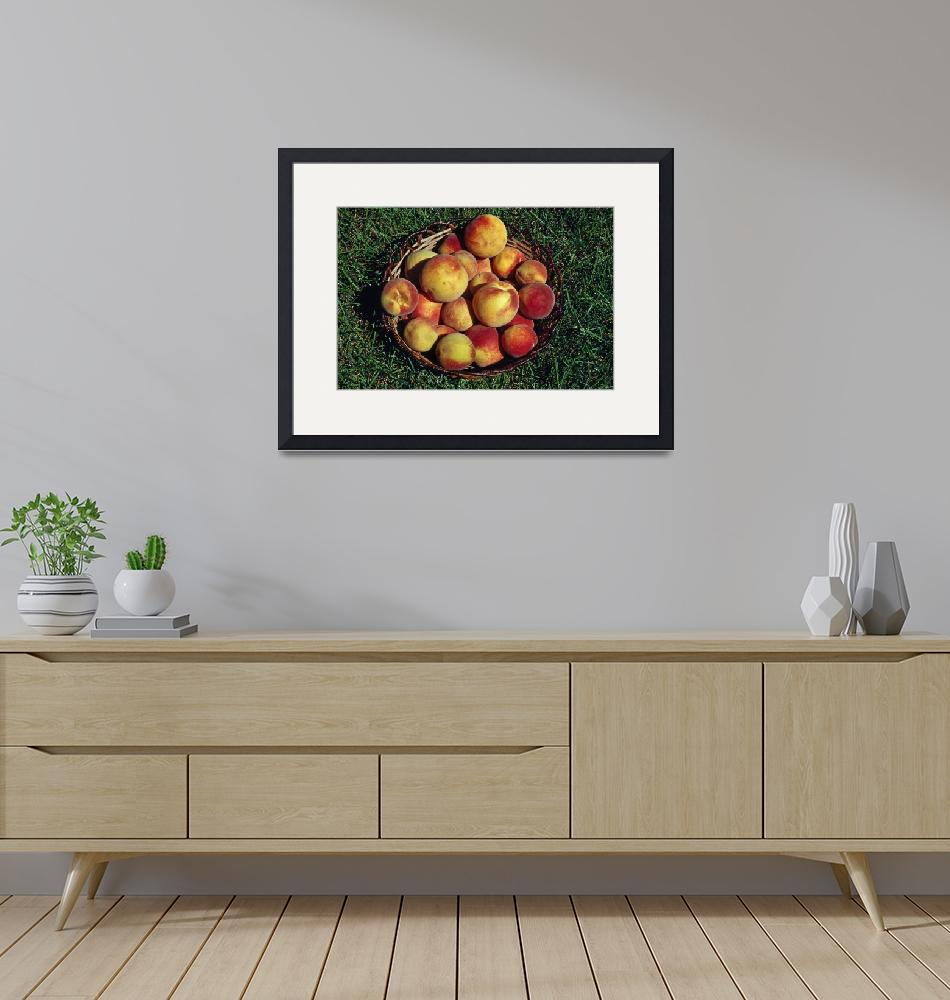 """""""Basket of harvested peaches.""""  by Panoramic_Images"""
