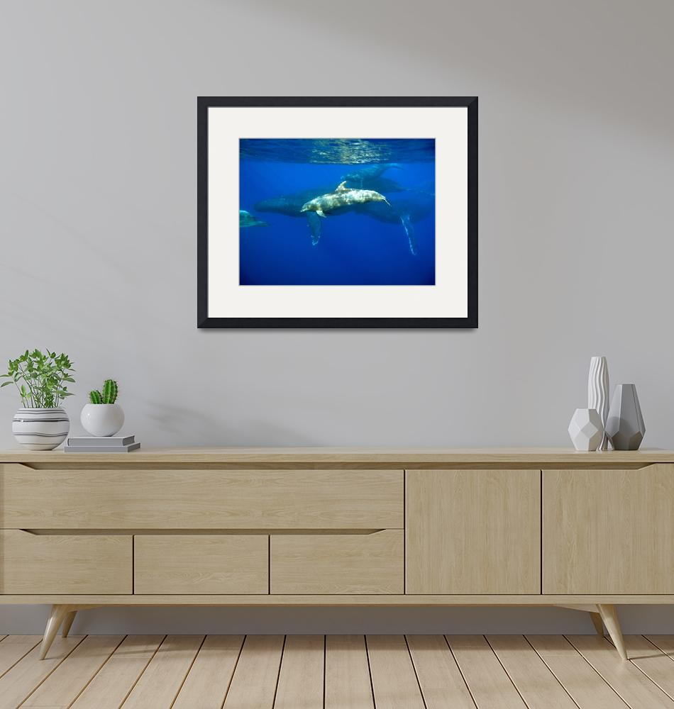 """""""Dolphin with Humpback Whales""""  (2010) by santos42"""