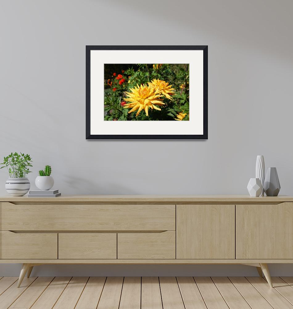 """Dahlia Flowers Fine Art Prints Gifts Dahlias""  (2016) by BasleeTroutman"