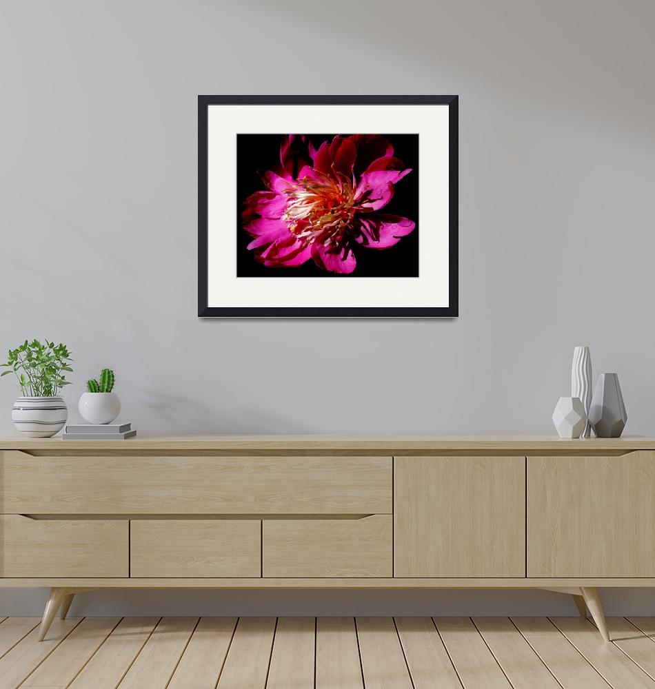 """""""Pink Peonies""""  (2010) by meaganjdesign"""