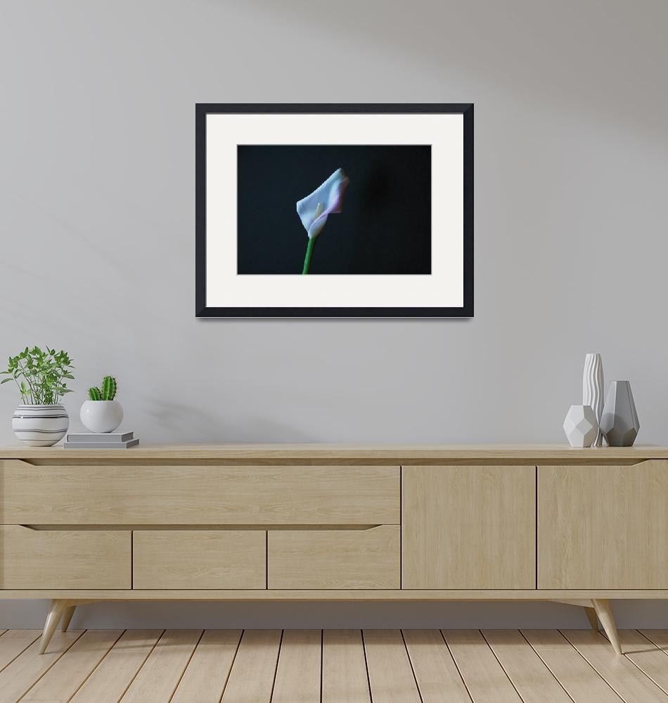 """""""calla lily""""  (2008) by mariematheson"""