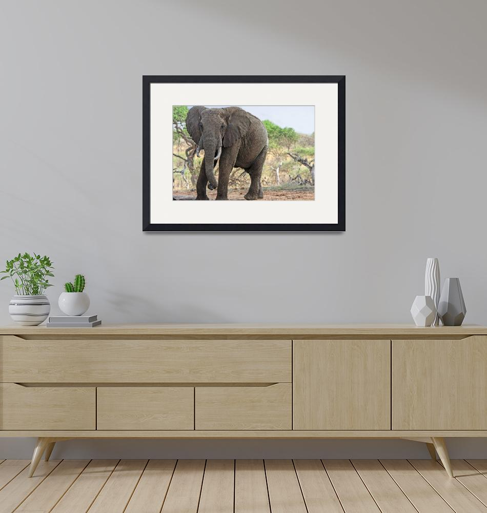 """African Elephant, Ol Donyo""  (2012) by mjphoto-graphics"