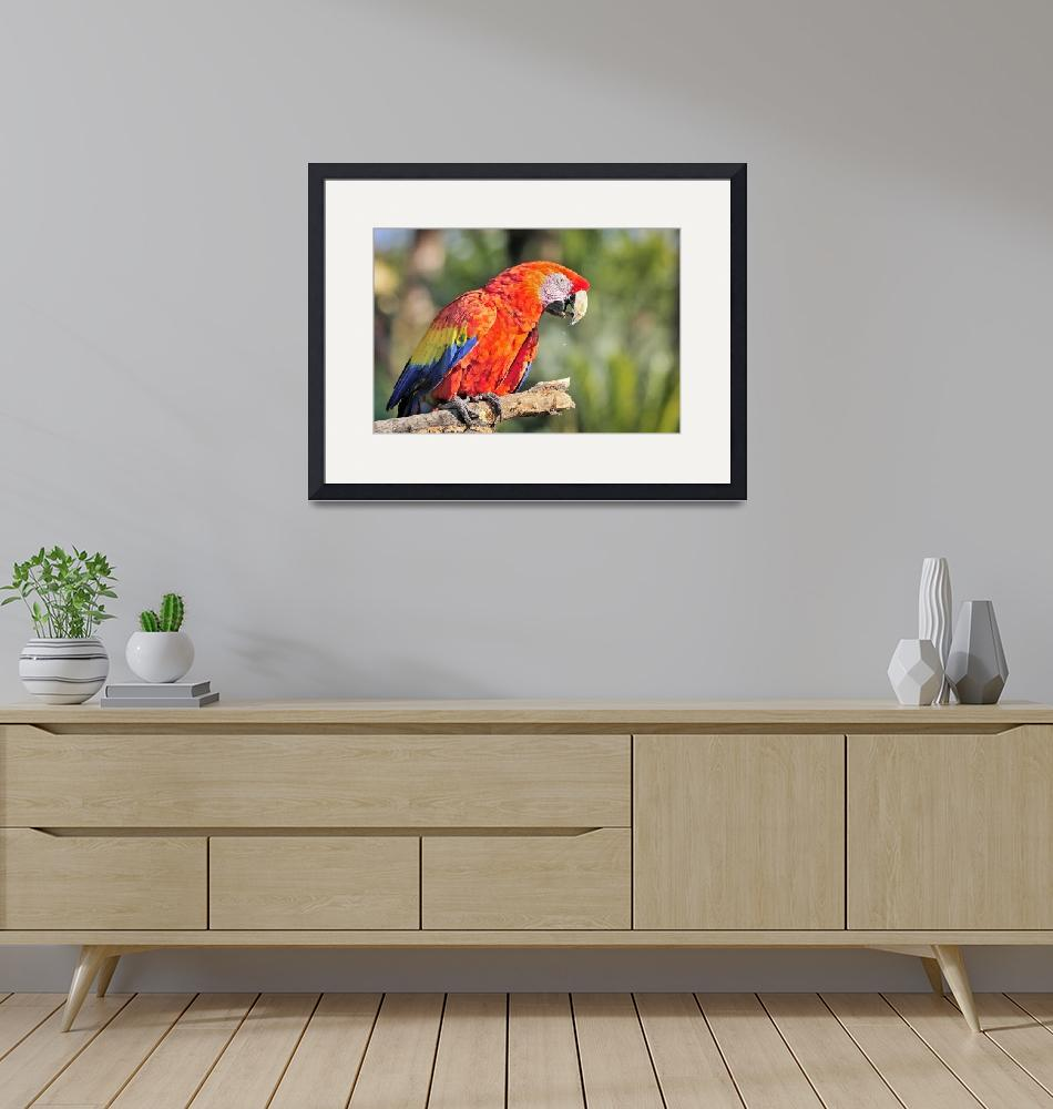 """""""WCC_0309- Red and Blue Macaw""""  by photocell"""
