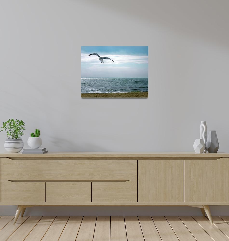 """Seagull at Hardings Beach, Chatham- Massachusetts""  (2020) by ChrisSeufert"