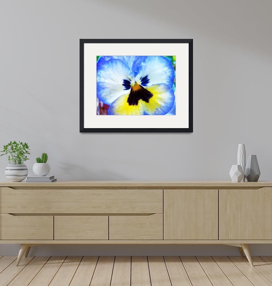 """""""Angelic Pansy""""  (2009) by awhoward"""