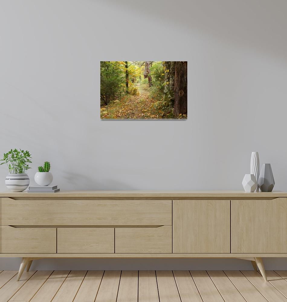 """""""Autumn path in Provence forest""""  (2008) by frenchlandscapes"""